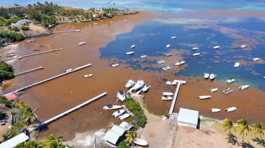 Martinique Sargasse Grogne Des 233 Lus Et Des