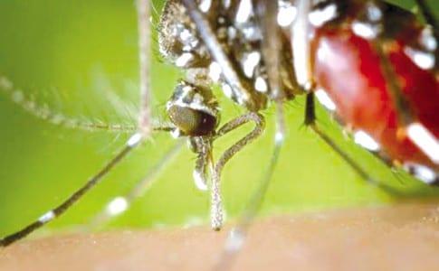 03-09-15-moustique