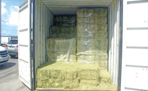 07-10-15-Les-bottes-de-foin-sont-arrivées-par-container