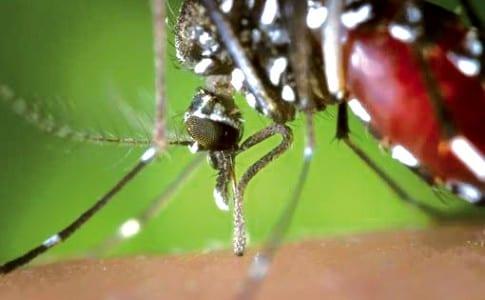 19-03-14-moustique