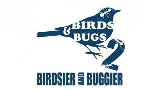 05-11-15-bird