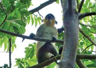 17-11-15-singe-vert