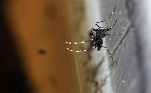 Aedes-albopictus-Kari-Salomon-via-Flickr-CC-BY-SA-2.0