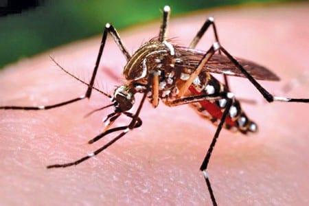 11-12-15-moustique