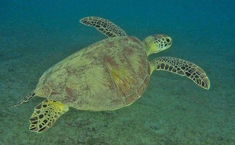 20140227-28-02-14-tortue