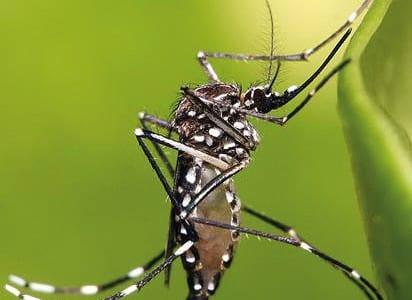 11-01-16-virus-zika
