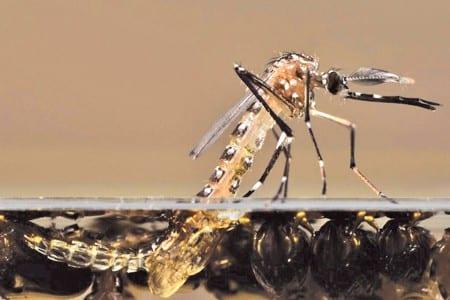 12-01-16-moustique-larves