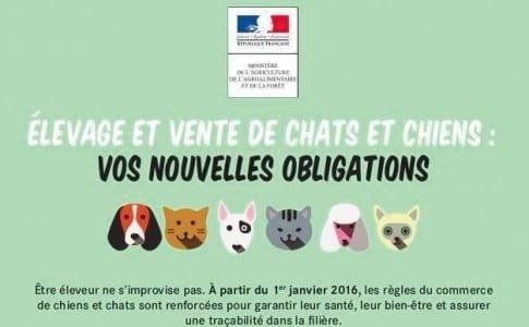 20-01-16-Chien-et-chat