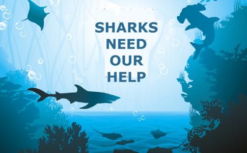 02-03-16-Requins