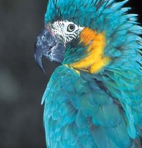 15-03-16-perroquet