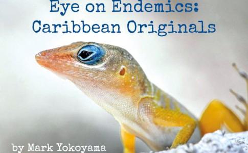 19-04-16-Eye-on-Endemics