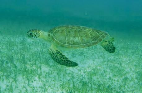 26-04-16-tortue-reserve-naturelle