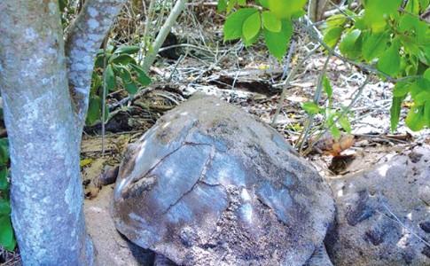 13-05-16-tortue