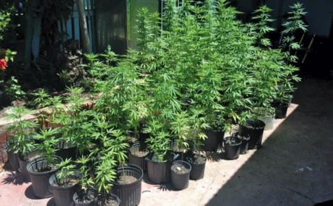 12-09-16-cannabis