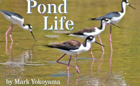 26-09-16-pond-life
