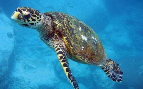 17-10-16-tortue-marine
