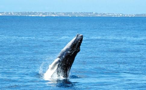 13-01-17-baleine