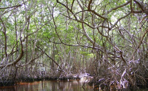 09-02-17-mangrove
