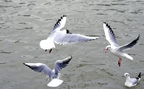 24-02-17-oiseau