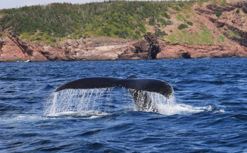 03-03-17-baleine
