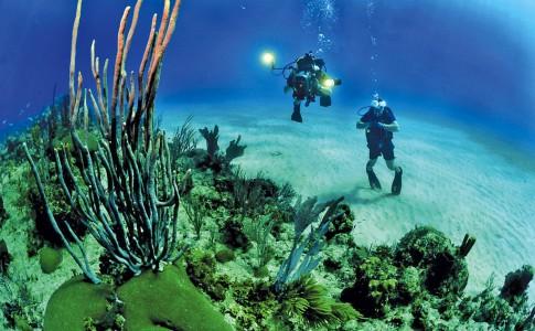 13-03-17-coraux