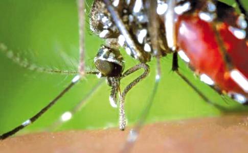 25-04-17-moustique