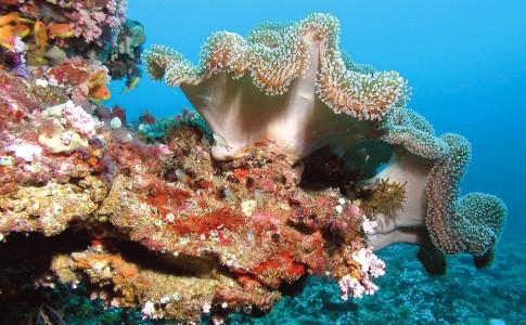 09-05-17-coraux
