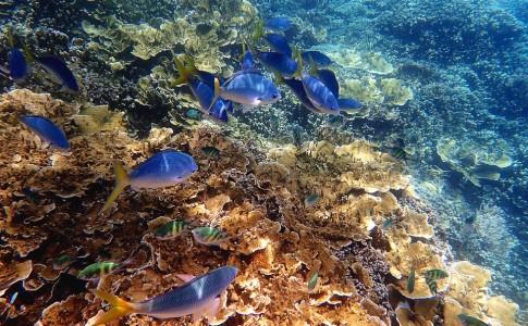 12-05-17-corail