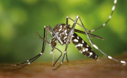 12-06-17-moustique