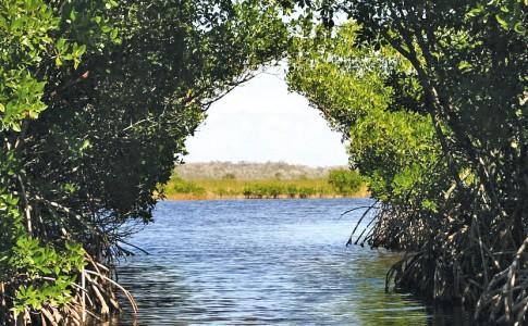 14-06-17-mangrove