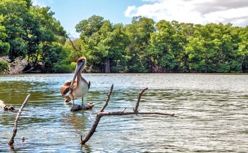19-07-17-pelican