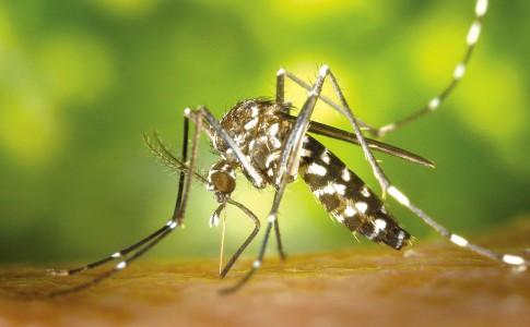 20-07-17-moustiques