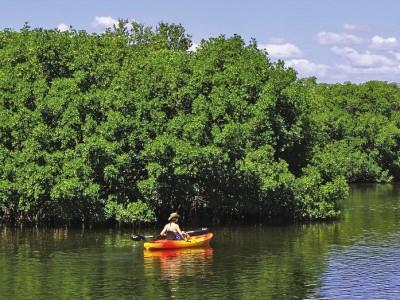 25-07-17-mangrove