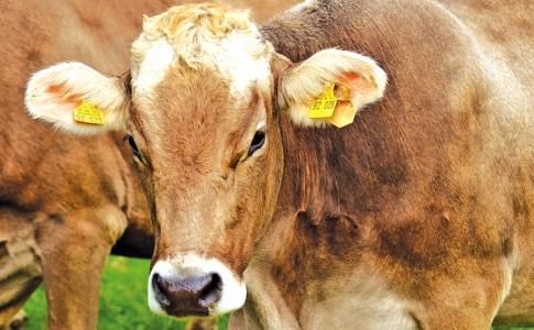 14-12-17-vache