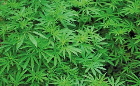 04-01-18-cannabis-2
